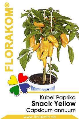 Kübelpaprika Snack Yellow