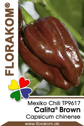 Mexikochili Calita® Brown
