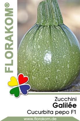 Zucchini Galilée