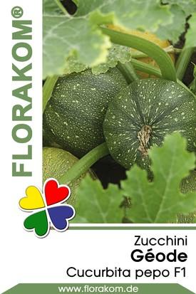 Zucchini Géode Samen