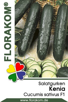 Salatgurken Kenia