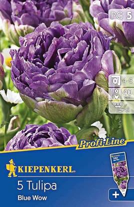 Gefüllte Tulpen Blue Wow