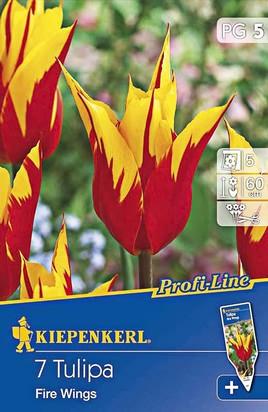 Lilienblütige Tulpenzwiebeln Fire Wings