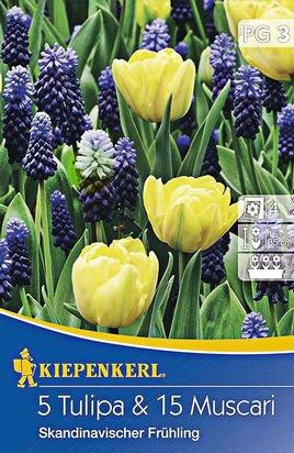 Blumenzwiebel Duo Skandinavischer Frühling