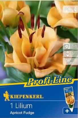 Gefüllte Lilien Apricot Fudge
