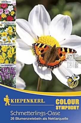 Schmetterlingsoase Mischung Knollen