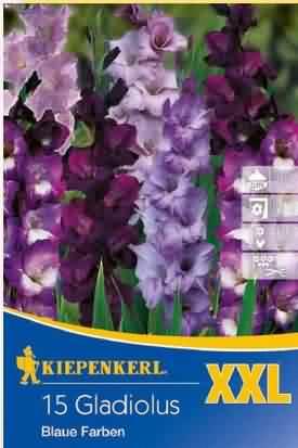 Blaue Farben Gladiolen Mischung XXL Knollen