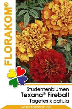 Studentenblumen Texana® Fireball Samen