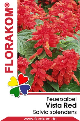 Feuersalbei Vista Red - Salvia
