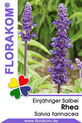 Salvien Rhea - Salvia Samen