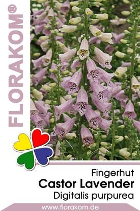 Fingerhut Castor Lavender