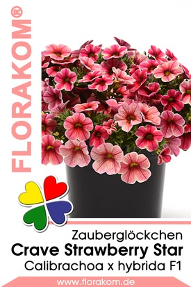 Zauberglöckchen Crave Strawberry Star Samen