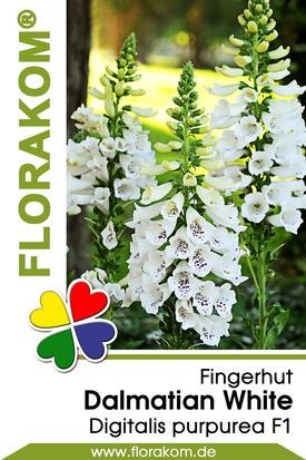 Fingerhut Dalmatian White Samen