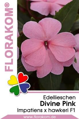 Edellieschen Divine Pink - Neu Guinea Samen