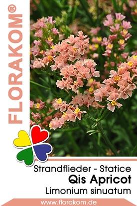Strandflieder Qis Apricot - Statice Samen