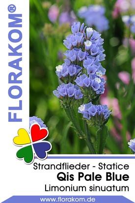 Strandflieder Qis Pale Blue - Statice Samen