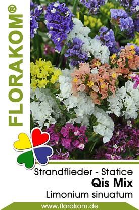 Strandflieder Qis Mix - Statice Samen