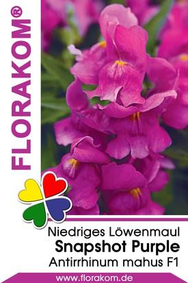 Löwenmäulchen Snapshot Purple Samen