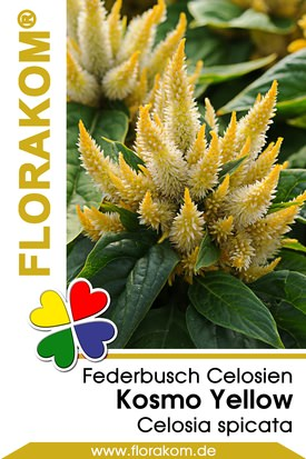 Federbusch Kosmo Yellow - Celosien Samen