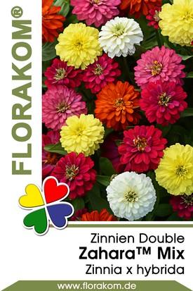 Zinnien Zahara™ Double Mix Samen