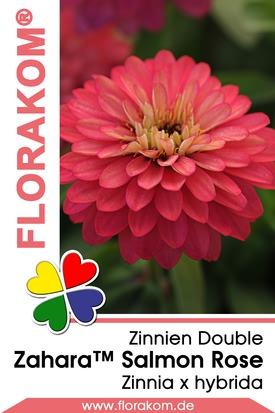 Zinnien Zahara™ Double Salmon Rose Samen