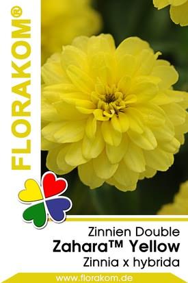 Zinnien Zahara™ Double Yellow Samen