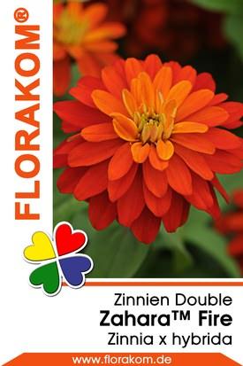 Zinnien Zahara™ Double Fire Samen