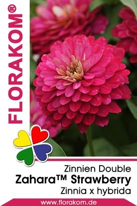 Zinnien Zahara™ Double Strawberry Samen