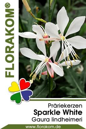 Prachtkerze Sparkle White Samen