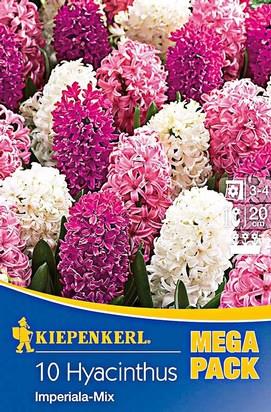 Hyazinthen Imperiala Mix Rosa / Weiß Mega-Pack