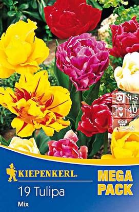 Gefüllte Tulpen Mischung Mega-Pack