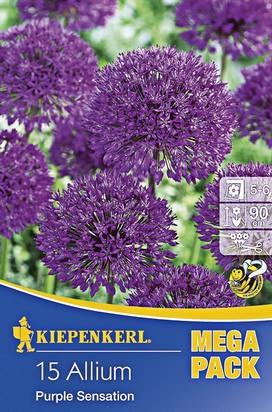 Zierlauch Purple Sensation Mega-Pack