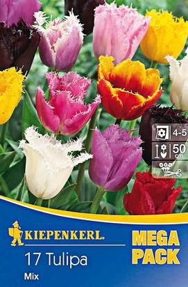 Gefranste Tulpen Mega-Pack