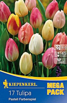 Pastell Farbenspiel Tulpen Mega-Pack