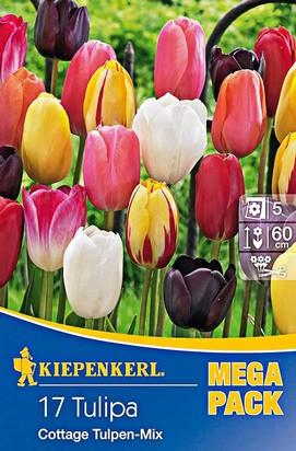 Cottage Tulpen Mix Mega-Pack