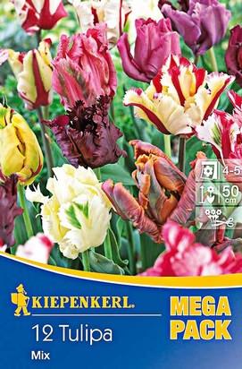 Papagei Tulpen Mega-Pack
