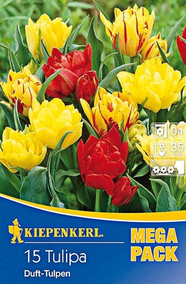 Duft - Tulpen Mix Mega-Pack