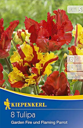 Tulpen Duo Garden Fire and Flaming Parrot