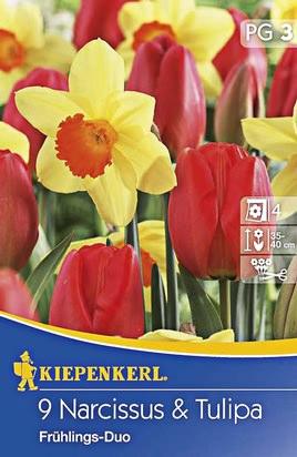 Frühlings - Duo Tulpen & Narzissen