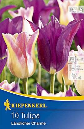 Tulpen Duo Ländlicher Charme