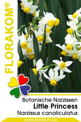 Botanische Narzissen Little Princess