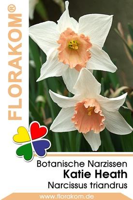 Botanische Narzissen Katie Heath