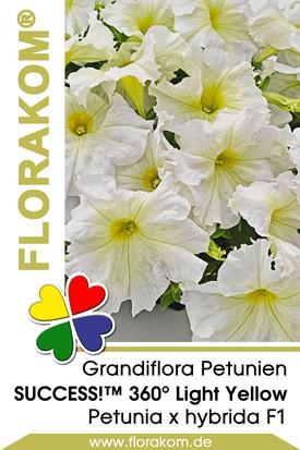Petunien Großblumige SUCCESS!™ 360° Light Yellow