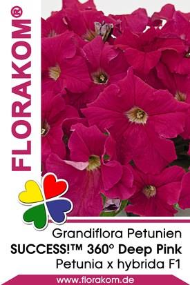 Petunien Großblumige SUCCESS!™ 360° Deep Pink