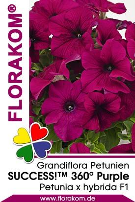 Petunien Großblumige SUCCESS!™ 360° Purple