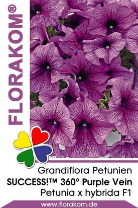 Petunien Großblumige SUCCESS!™ 360° Purple Vein