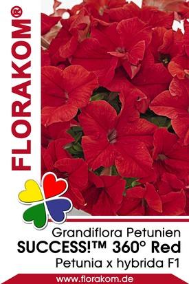 Petunien Großblumige SUCCESS!™ 360° Red