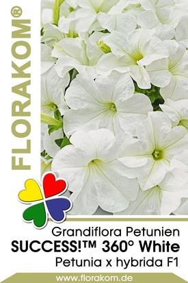 Petunien Großblumige SUCCESS!™ 360° White