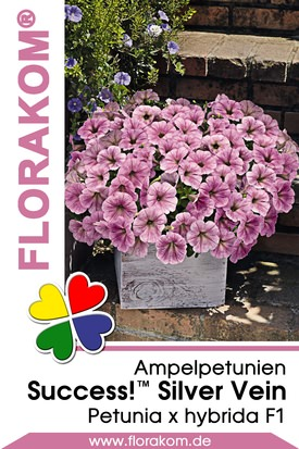 Ampelpetunien SUCCESS!™ Silver Vein