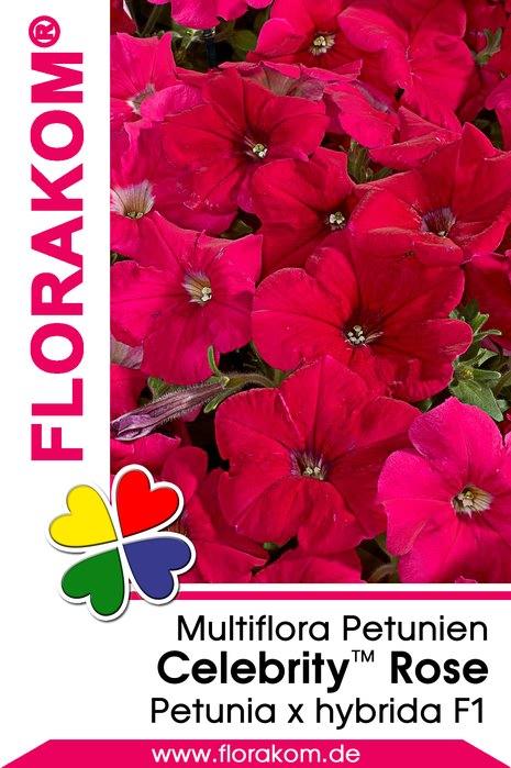 multiflora petuniensamen celebrity rose florakom. Black Bedroom Furniture Sets. Home Design Ideas